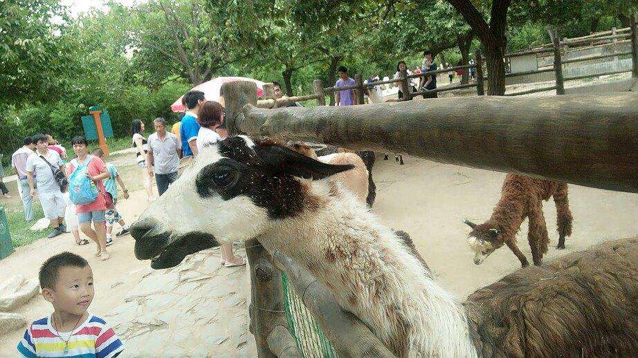 秦岭野生动物园旅游景点攻天下略图攻略会完美风云6图片