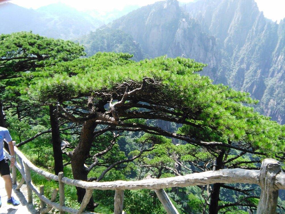 【携程攻略】安徽黄山风景区适合家庭亲子旅游吗,黄山