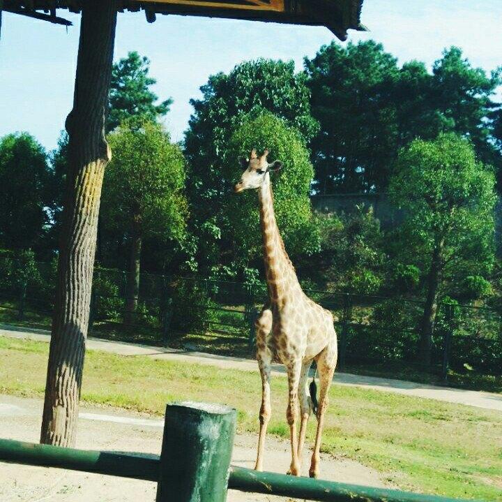 【携程攻略】湖南长沙生态动物园景点