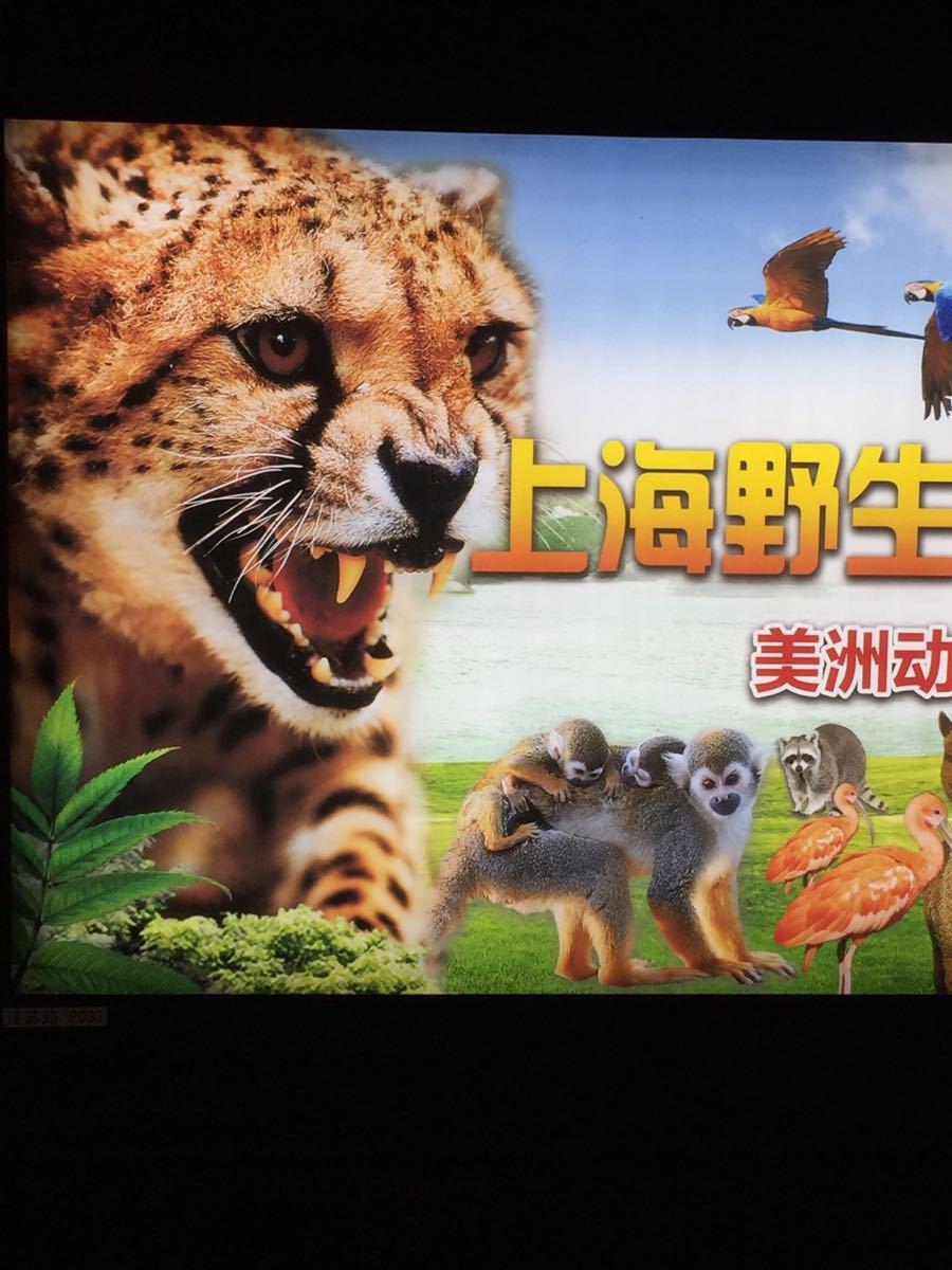 """我去过2次了,你可以参考下以下的动物表演时间安排行程,另外,最好去早点,去了就直接去野生区看野生动物; """"野生动物园的活动 上海野生动物园的活动还挺多的, 上午8:00-9:00点的时候在正大门内广场有动物迎宾, 上午10:00和下午3:15在海狮表演馆分别有次海狮表演, 上午11:00的时候在动物训练场有群狮群虎表演, 下午1:00在百兽表演场有艺术表演, 下午2:15,在跑狗场有跑狗跑马表演。 进去的时候"""