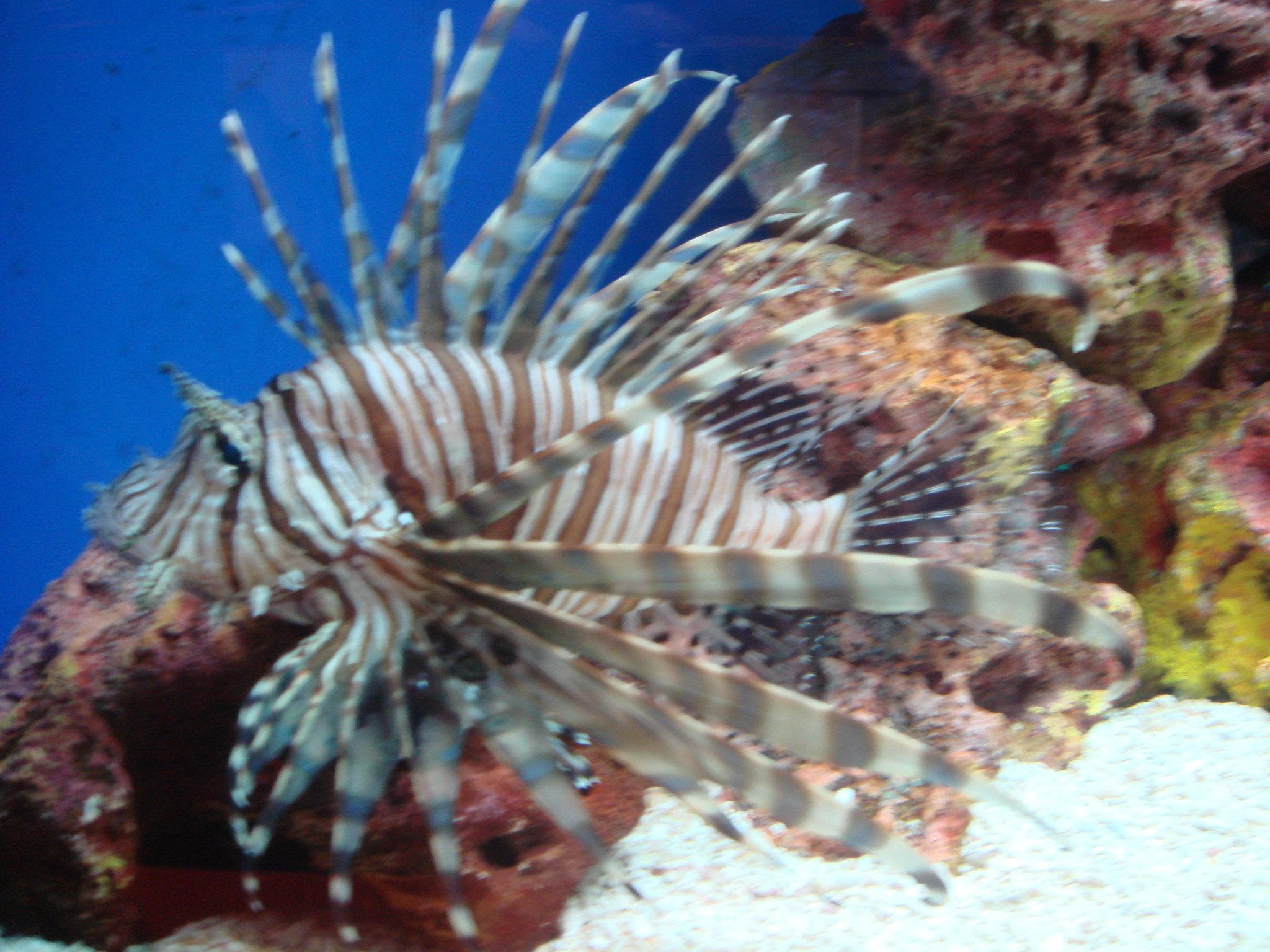 壁纸 动物 海底 海底世界 海洋馆 水族馆 鱼 鱼类 2048_1536