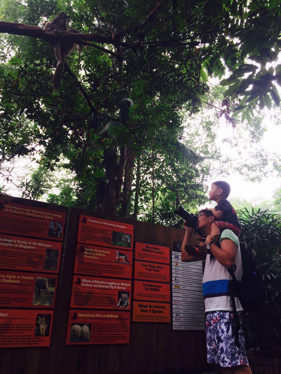入口处的小猴子一下子把大家吸引住了,开放式的动物园让游客可以近
