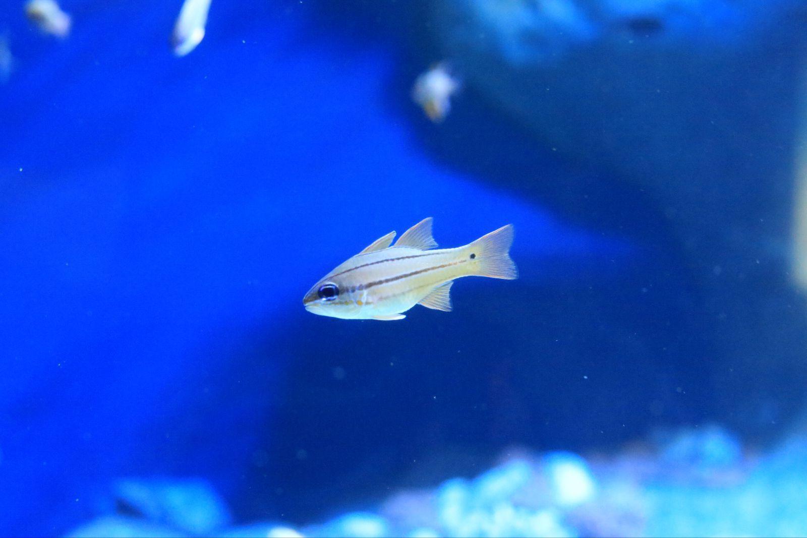 鱼都给我们带来前所未有的视觉体验观景窗旁边还配有显示屏对海洋生物