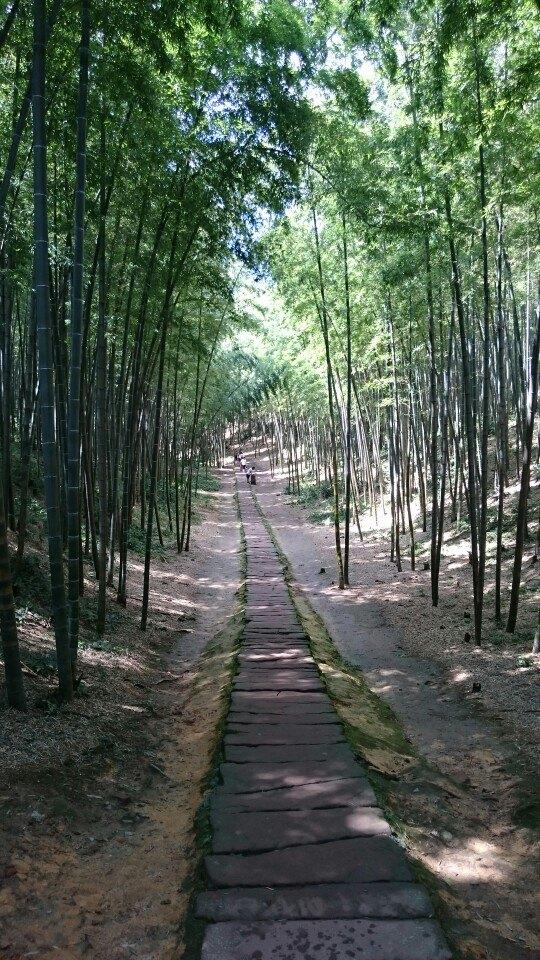 【風景】竹海風景真的是沒話說的,翠竹碧水,遙天飛瀑,峭壁險崖