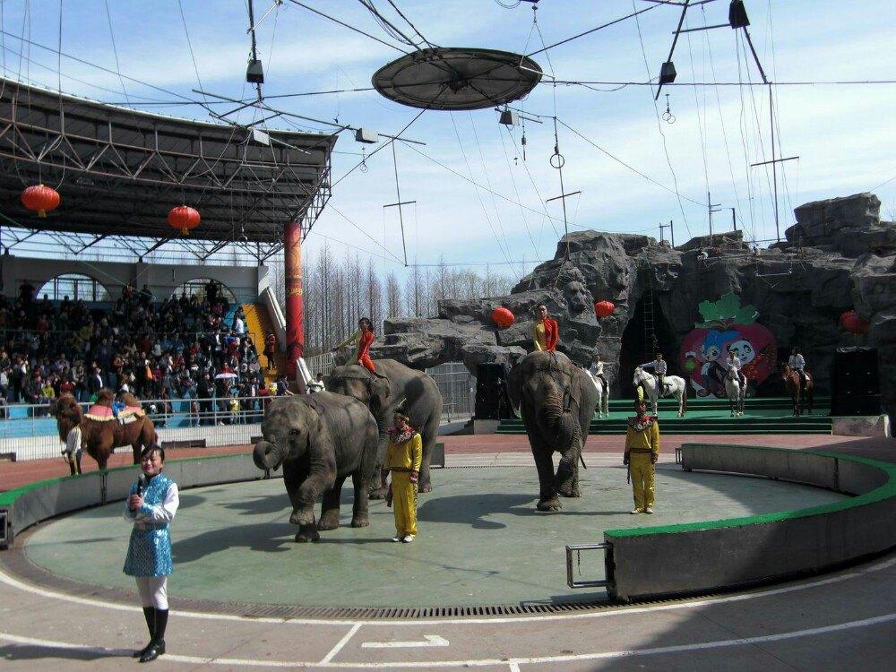 上海野生动物园位于浦东