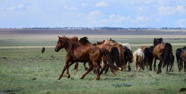 蒙古之旅大全图片