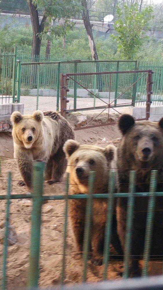 【携程攻略】河北秦皇岛野生动物园景点