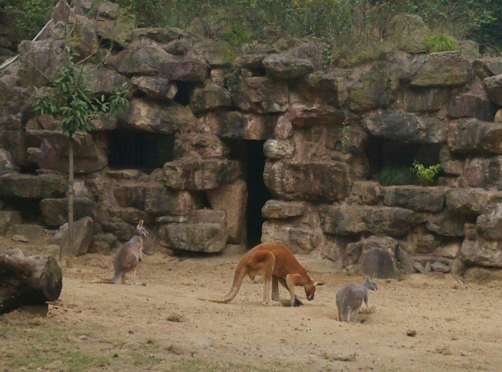 【携程攻略】浙江杭州杭州动物园好玩吗
