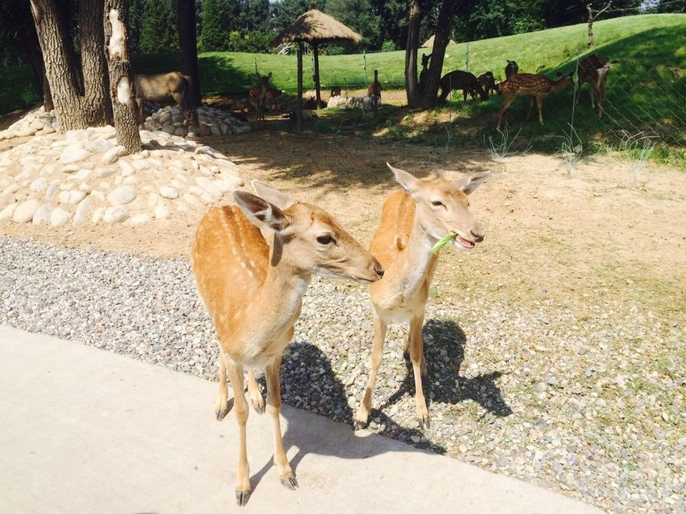 北京大兴野生动物园一日游