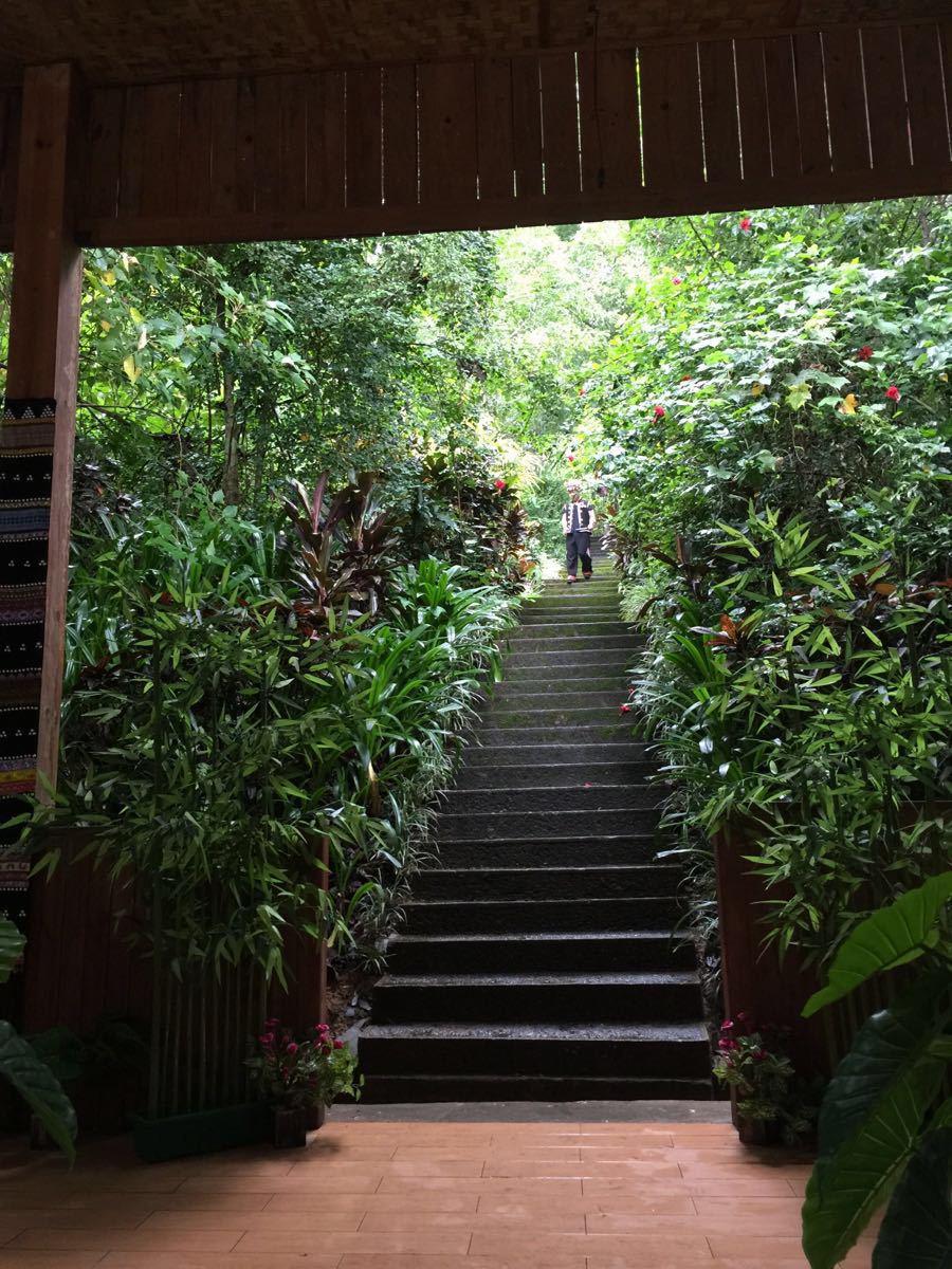 【携程攻略】云南西双版纳西双版纳原始森林公园好玩