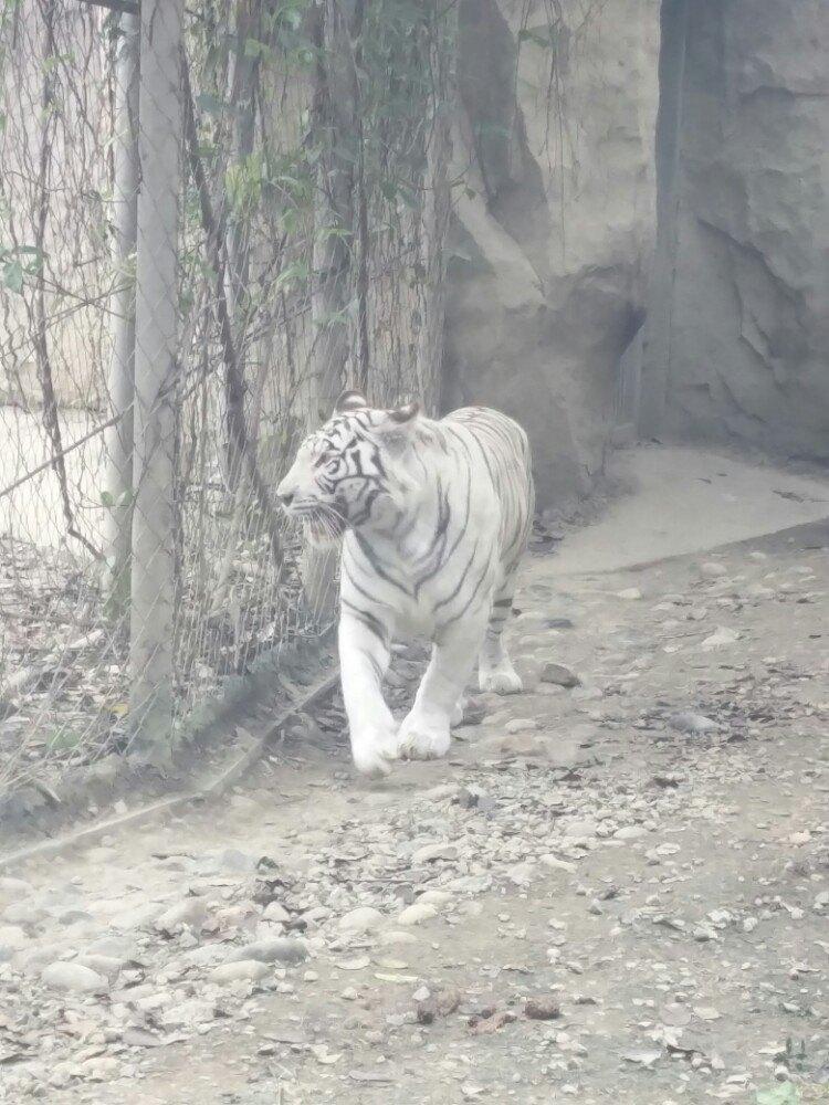 【携程攻略】四川成都动物园景点