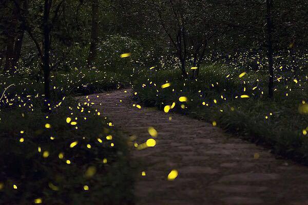 p图素材萤火虫
