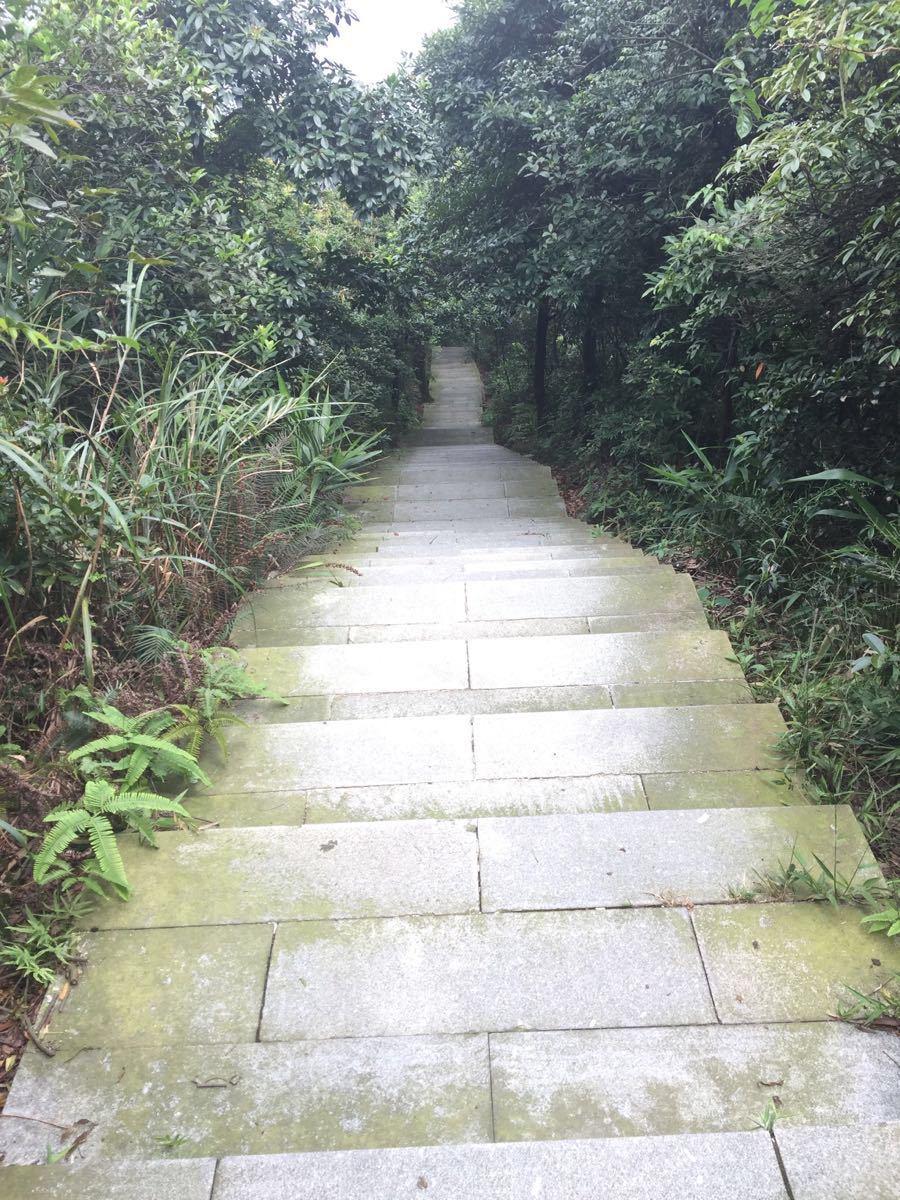 王子山森林公园门票_2019王子山森林公园_旅游攻略_门票_地址_游记点评