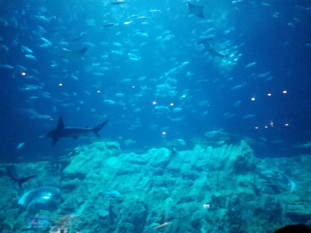 亚洲最大的海洋馆,海洋动物最全,各项表演很好看,且对儿童游教育意义.