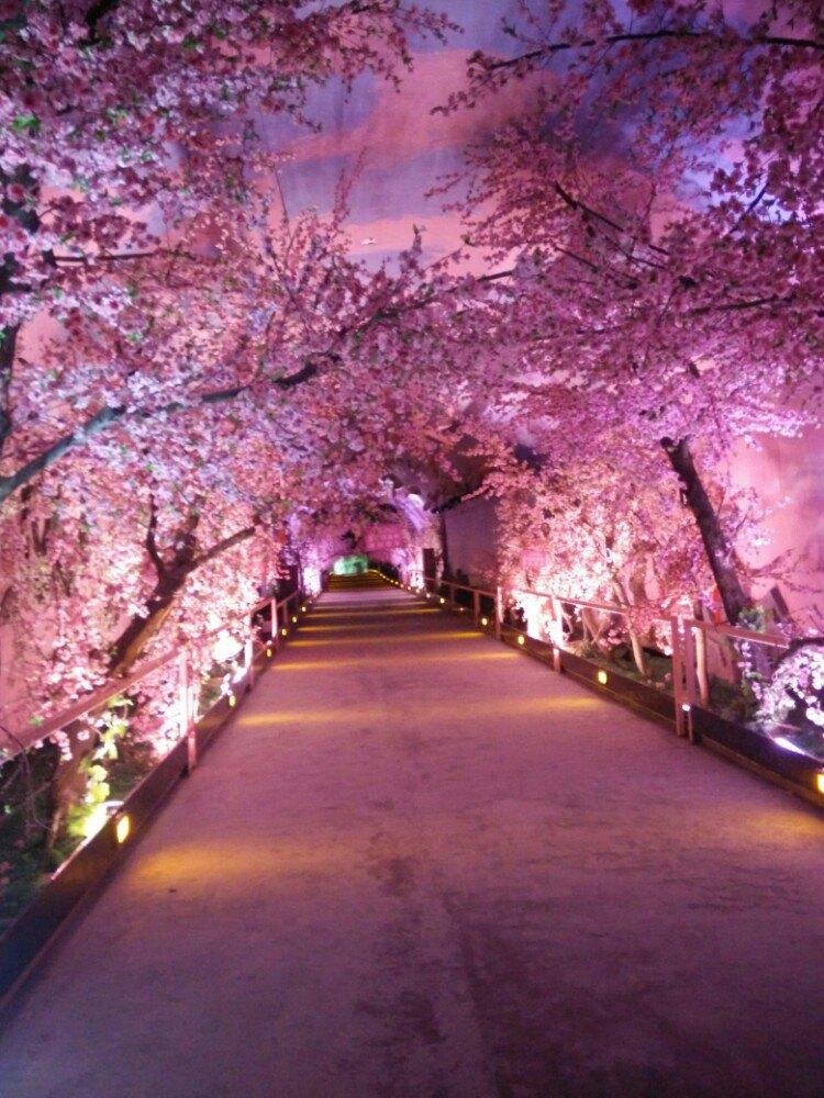 桃花手機壁紙風景優美
