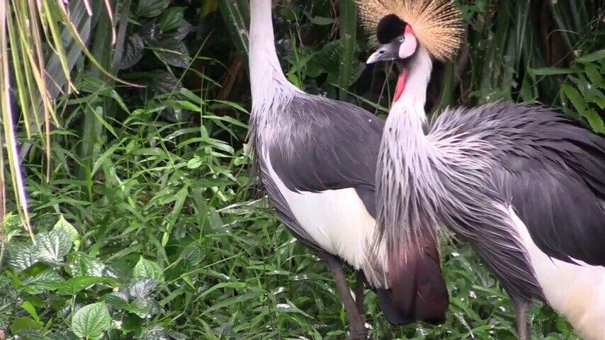 在飞禽公园里可以观赏到来自世界各地的飞禽类,稀罕的鸟类和两栖动物