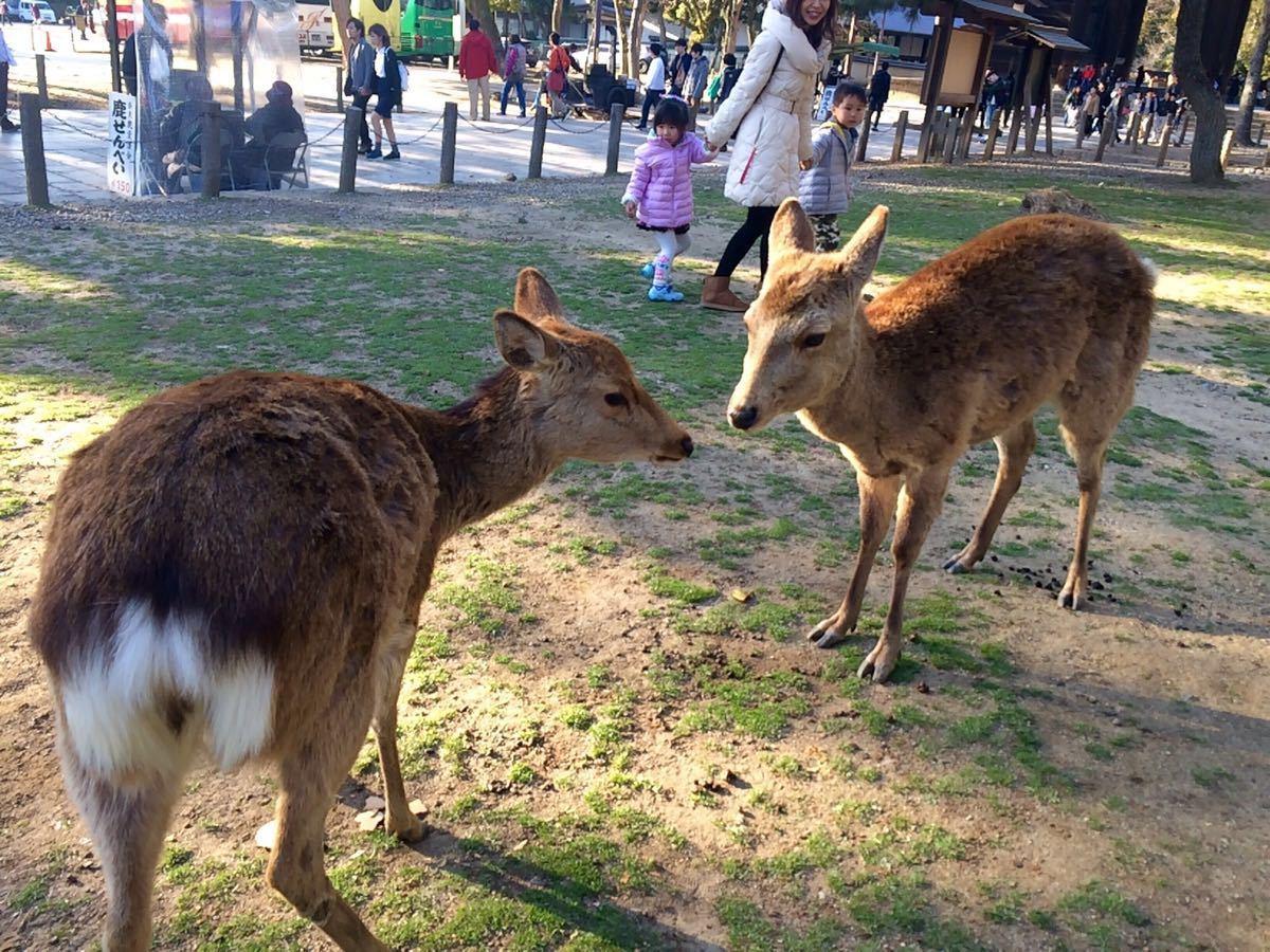 哈哈太可爱啦 小鹿都被喂饱了 拒绝进食 囧 看这一脸嫌弃的表情 笑cry