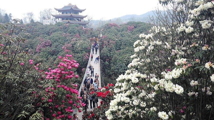 百里杜鹃风景区旅游景点攻攻略2018春节国内v杜鹃省略图图片