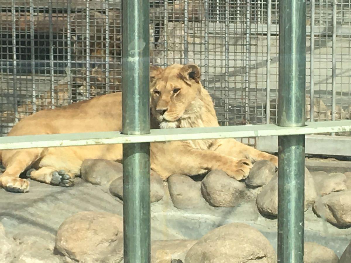 【携程攻略】山东青岛青岛动物园好玩吗,山东青岛动物
