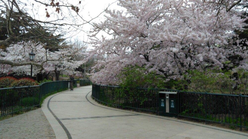 【携程攻略】山东青岛中山公园好玩吗,山东中山公园样