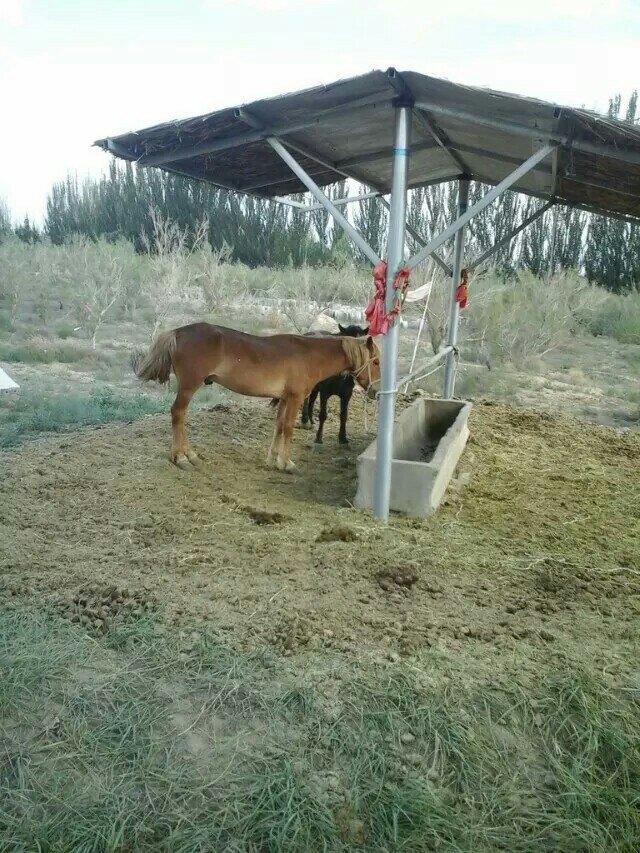 【携程攻略】甘肃神州荒漠野生动物园景点