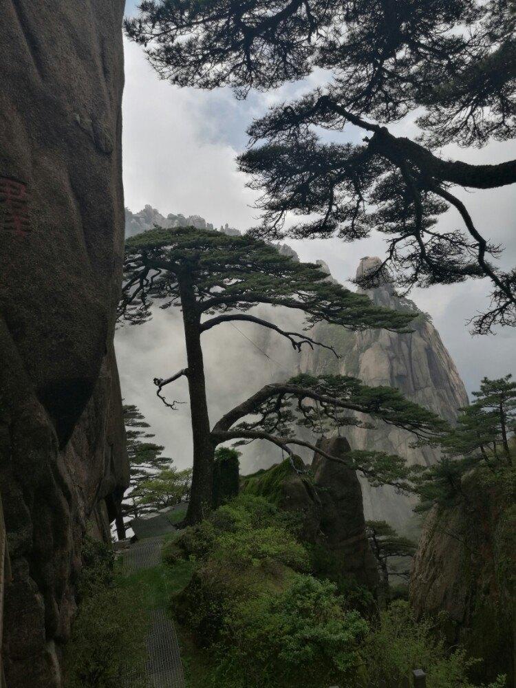壁纸 风景 树 松 松树 750_1000 竖版 竖屏 手机