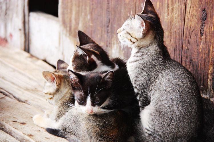 最后一站是大名鼎鼎的猫跳寺。虽然猫儿们早就不跳了,但我还是看到一只小猫两三下就跳上一只一米多高的梯子。路遇一对美国来的夫妇,他们是真的很爱猫咪,家里也养了四五只猫。看他们抚摸猫咪的样子,眼角眉梢都是爱。我也坐在地上,开心的看着那些猫摆出千姿百态。最可爱的是猫妈妈给一只刚出生的奶猫喂奶,她的另外一个孩子就舔着她的腿撒娇。过了一会儿,猫妈妈喂完奶,拍拍那个撒娇的小猫,给他挠痒痒。 回程路上,看水鸟一片。