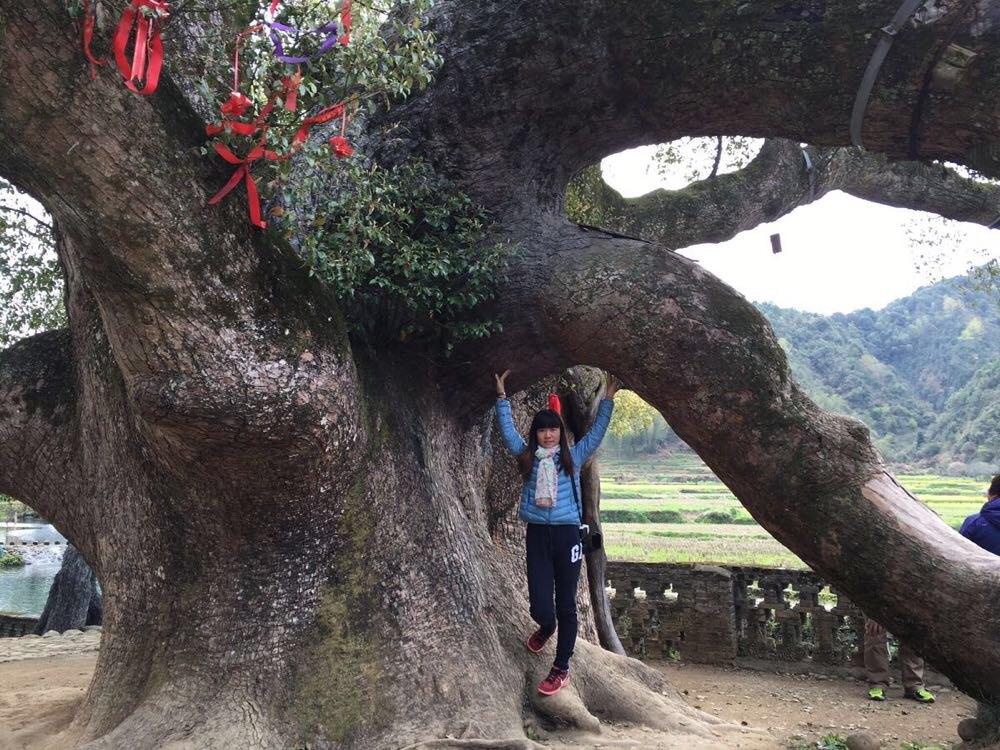 """主景点是一棵千年大樟树,导游说婺源没有寺庙,这的人不信教,他们只信樟树,认为樟树能保佑他们平安健康。有个说法是""""围着樟树走一走,一活活到九十九;樟树身上摸一摸,一活活到一百多"""",我决定去摸一摸 排队进入口的时候发现这棵树,像假的一样,用手一摸却是真的,不知道叫什么名字,上面还有小花苞呢。就是这棵大樟树了,看到这棵树有多大了吧,不愧是千年大樟树,和它比起来,自己好渺小哦发现了一个纸伞店,去look look很漂亮的伞,五"""