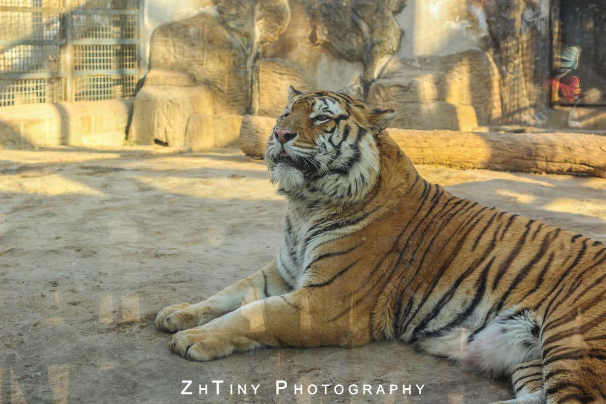 【携程攻略】山东济南济南动物园好玩吗