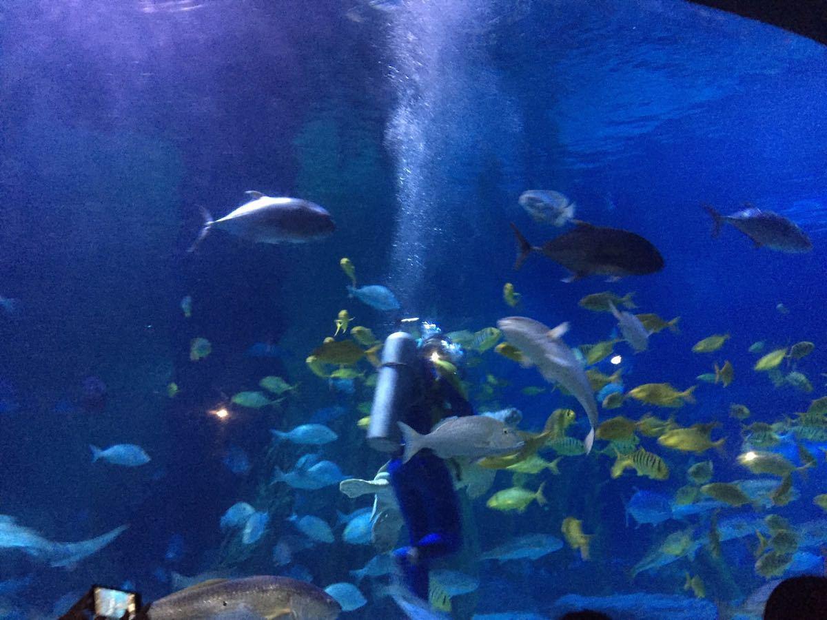 都是小孩子喜欢的海洋动物