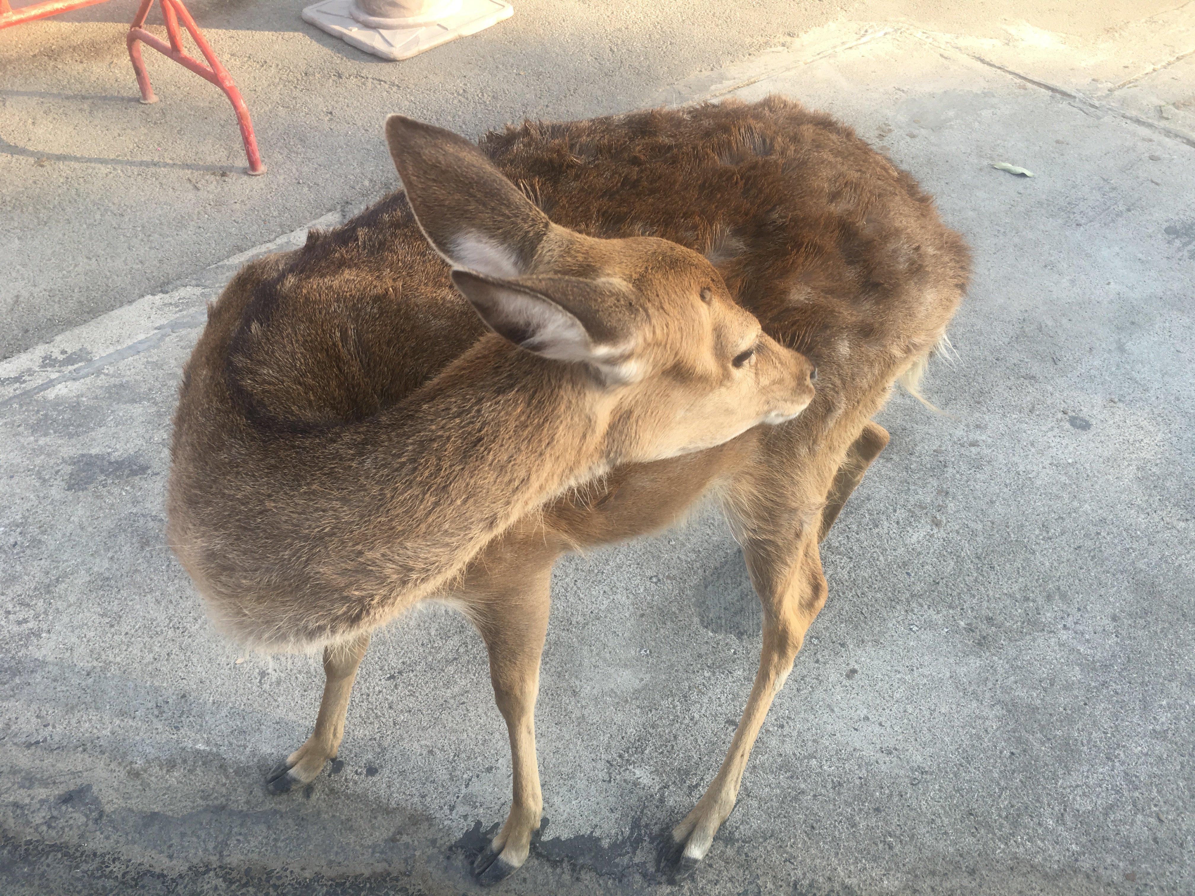 【携程攻略】清迈府清迈夜间动物园适合家庭亲子旅游