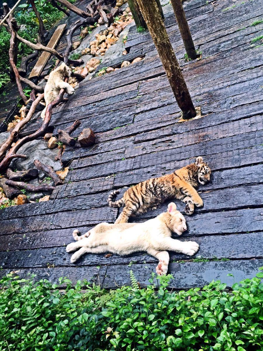 【携程攻略】广东广州长隆野生动物世界好玩吗,广东怎