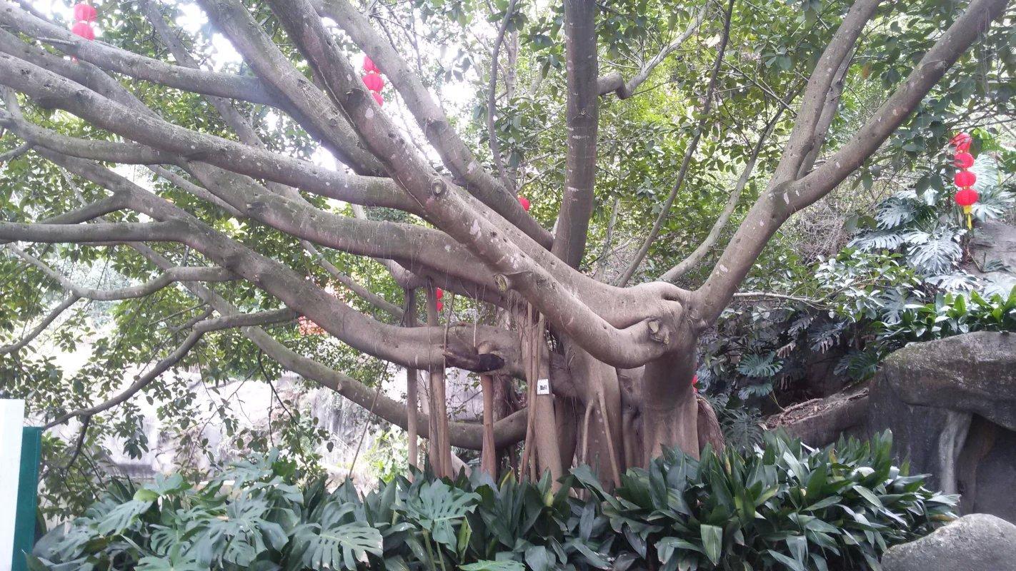 具有热带雨林特色,植物园很大和南普陀寺的后山五老峰是相通的可以走