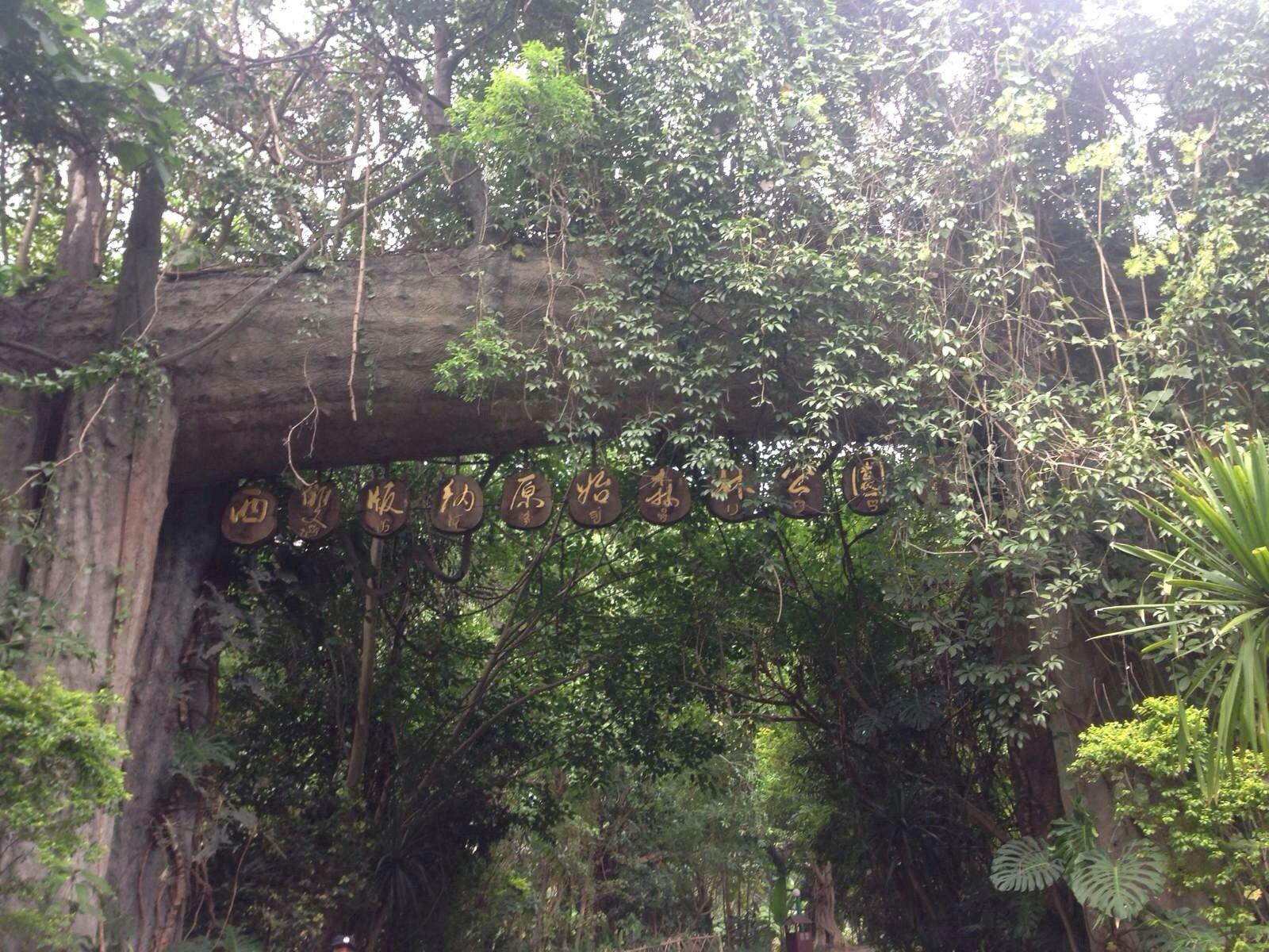 西双版纳原始森林公园出了山寨走一个栈道下楼梯,走个5分钟就到了人工设计的九龙瀑布,下面有卖水,冰淇淋和工艺品的,顺别歇歇脚等待电瓶车带游客到下一个景点游玩。电瓶车到了一个原始森林小路,体验原始森林。一下车就有一大群猴子迎接我们...瞬间想起了峨眉的猴子,各种枪.