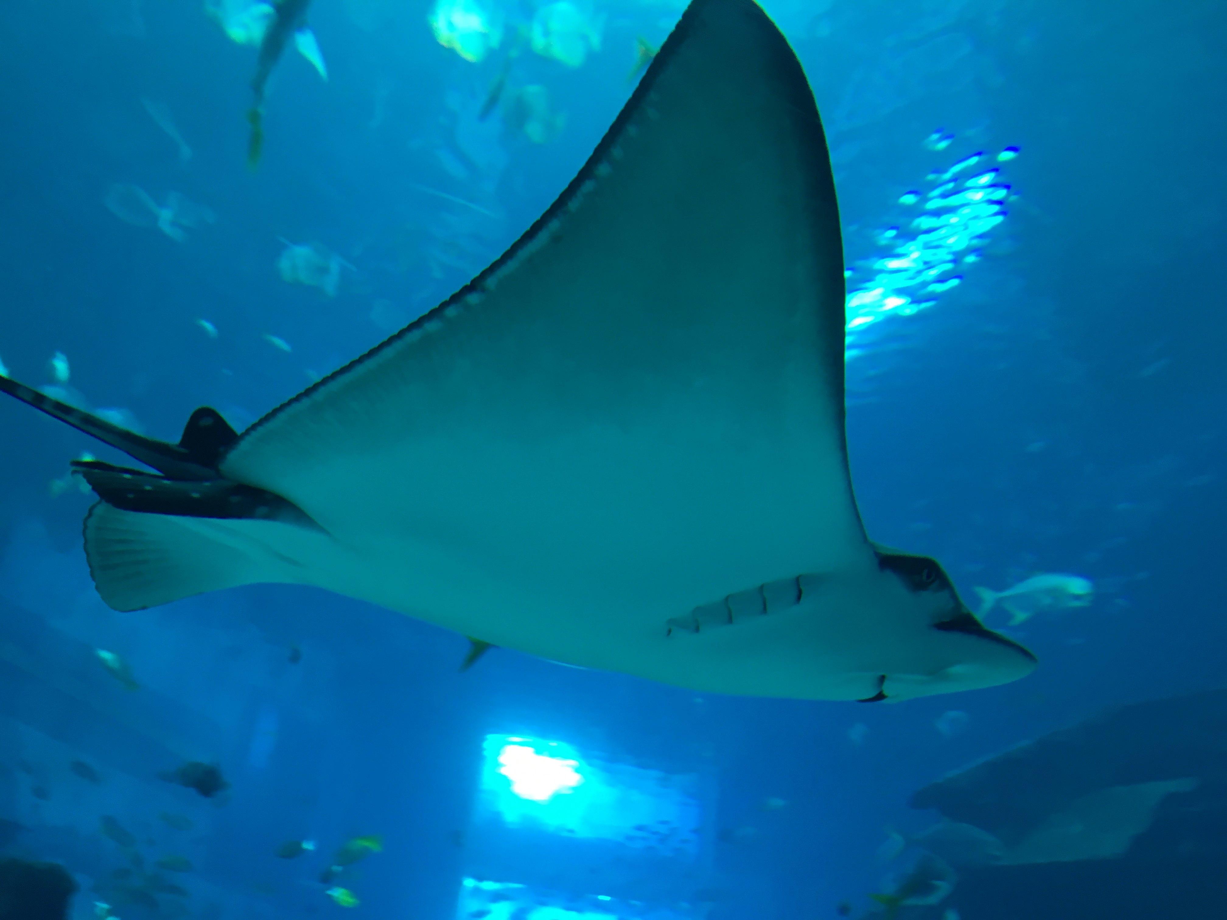 壁纸 动物 海底 海底世界 海洋馆 水族馆 鱼 鱼类 桌面 4032_3024