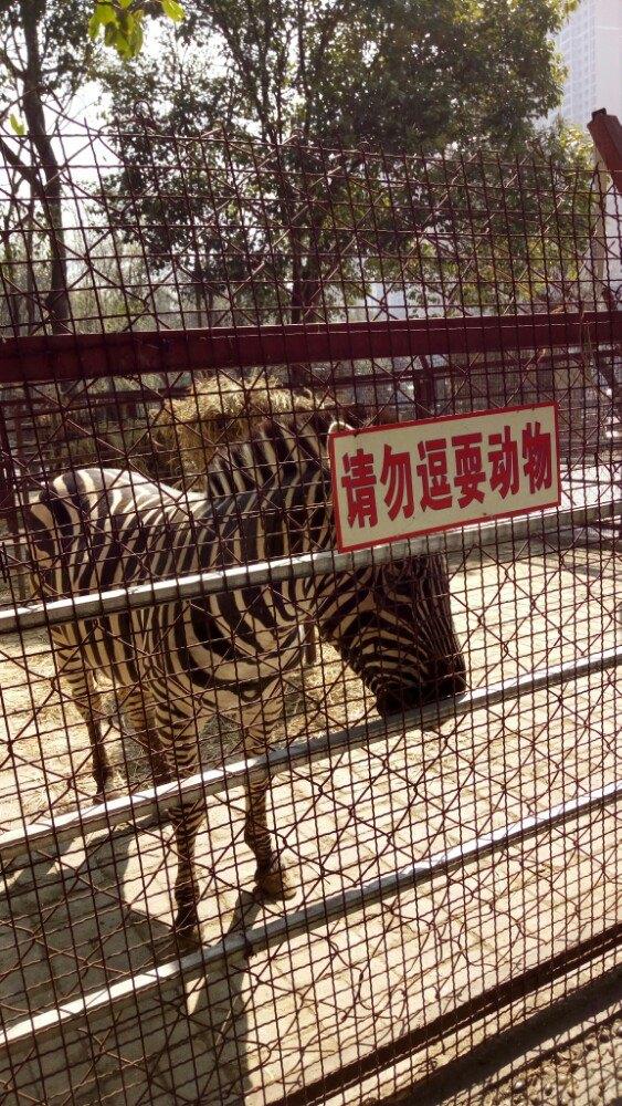 【携程攻略】贵州六盘水动物园景点,带小朋友去还是很