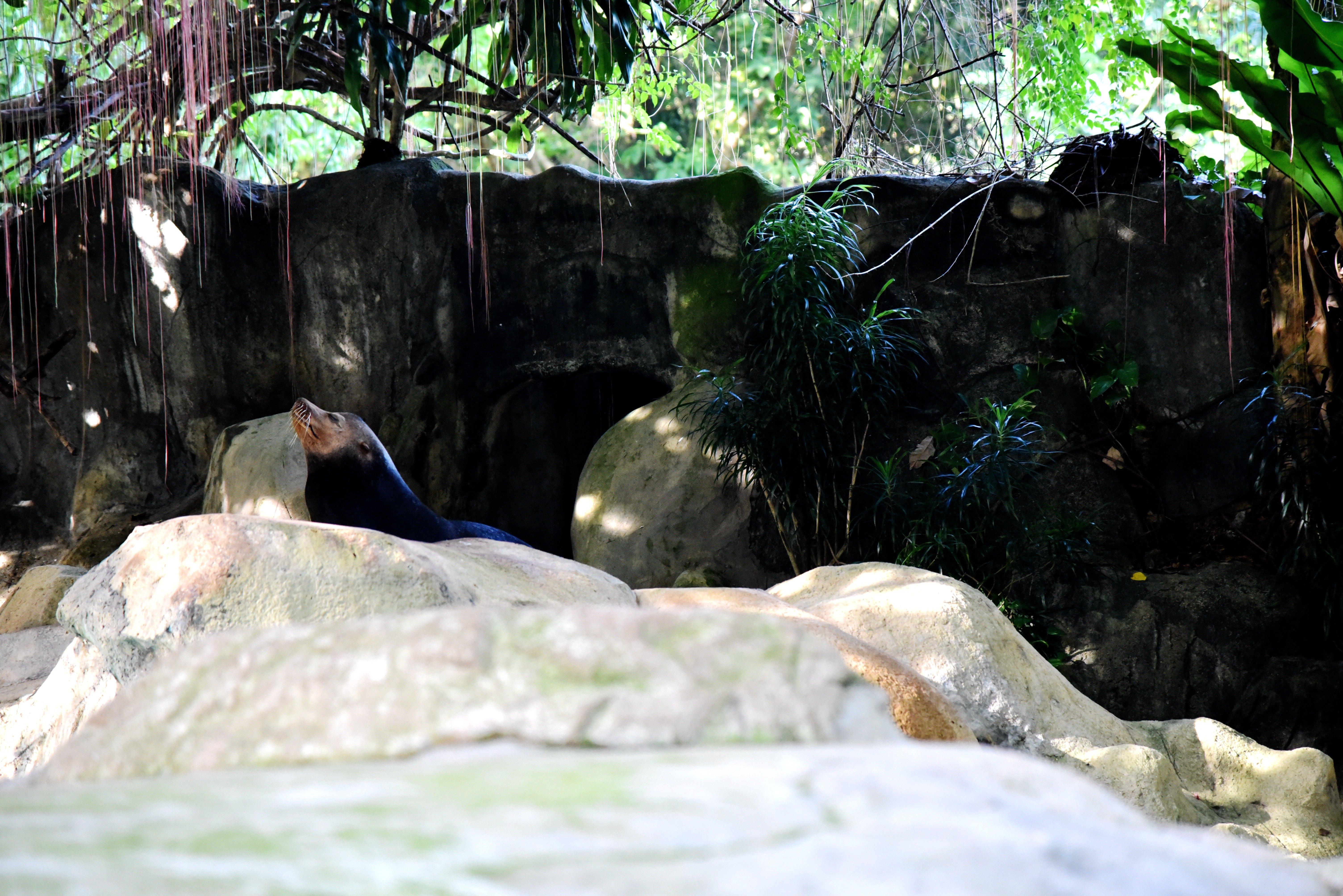 新加坡动物园里的儿童戏水区.大人也可以进去玩,陪着孩子进去,呵呵.