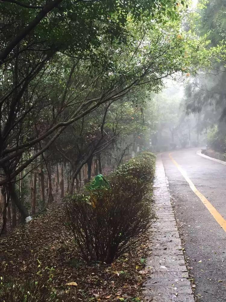 泉州森林公园图片