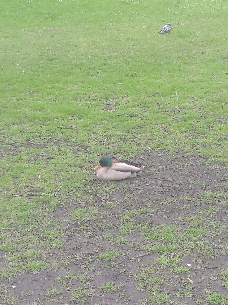 公园内有很多小动物,有野鸭,天鹅,松鼠,鸽子,大雁等等,它们见人不怕.