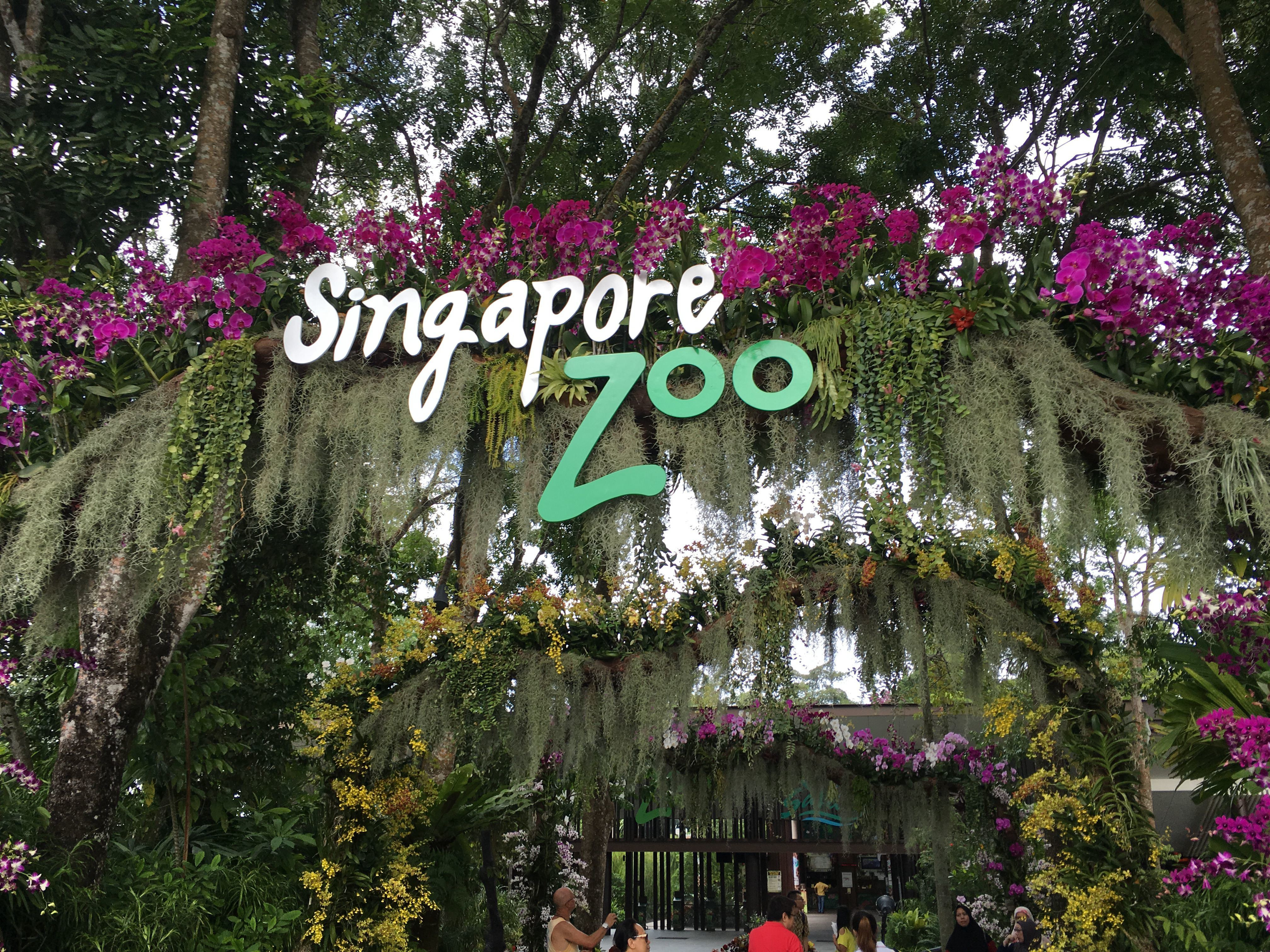 新加坡动物园,在新加坡的北侧,如果要过去玩的话最好准备一天的时间,一方面因为所处的地理位置比较偏,单程车程就要消耗一个小时,此外园区也很大,除了看一个个展区的动物之外,还有提供不同时间段的表演,那么在不同展区看表演和等候的时间加起来至少需要一个半小时。此外,从新加坡动物园也可以到河川生态园和夜间动物园玩,到河川生态园步行约一分钟,到夜间动物园步行约三分钟,非常方便。