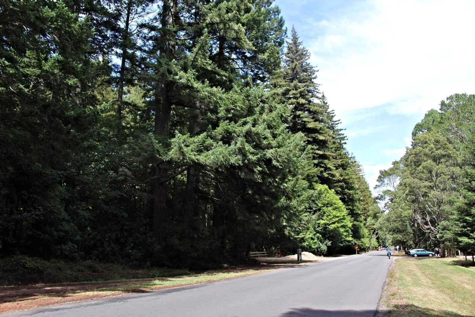 红木森林公园图片