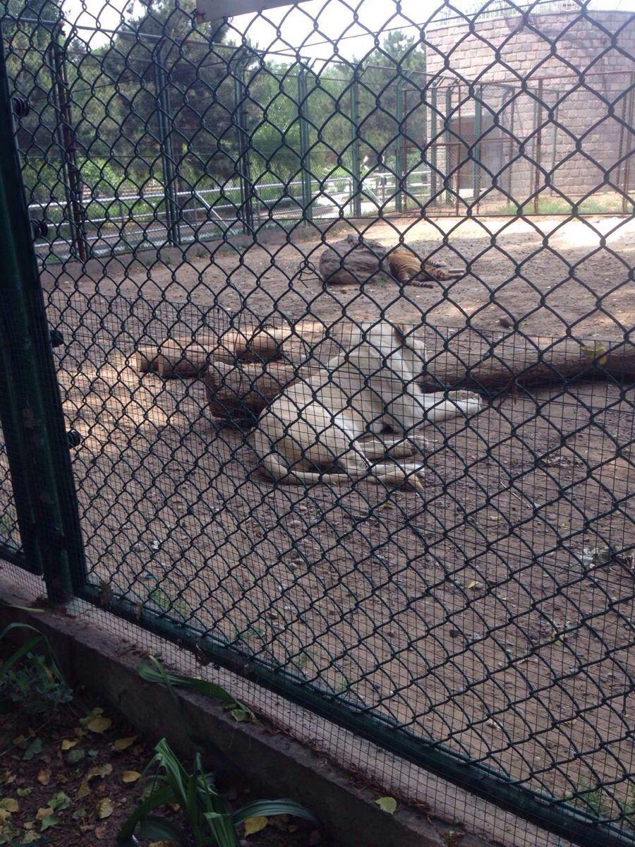 【携程攻略】北京北京野生动物园景点