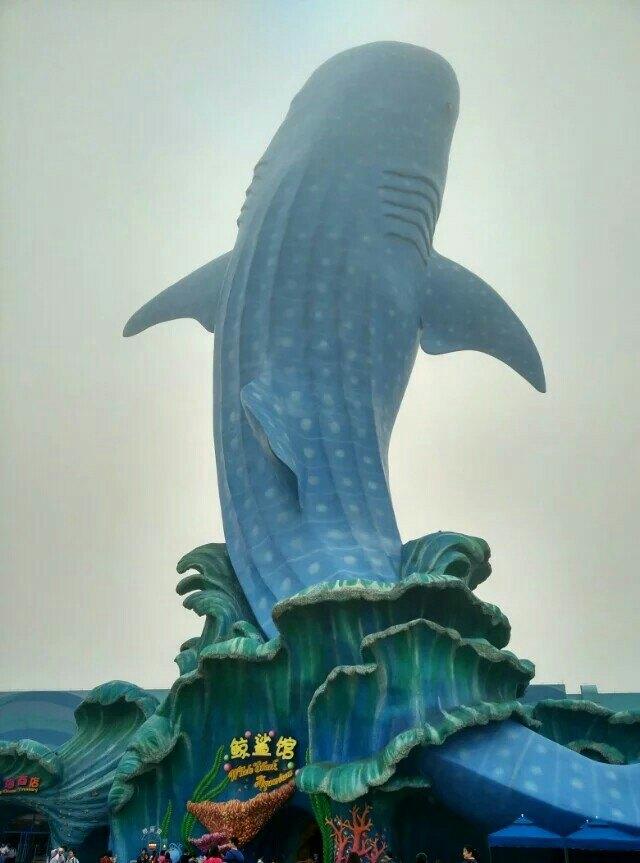 如潜艇般将游客潜行于绚丽的海底世界,各种珍稀海底动物在身边畅游,不