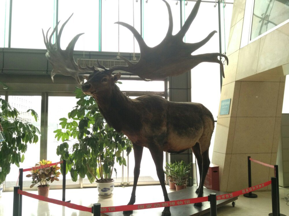 【携程攻略】北京中国动物博物馆景点