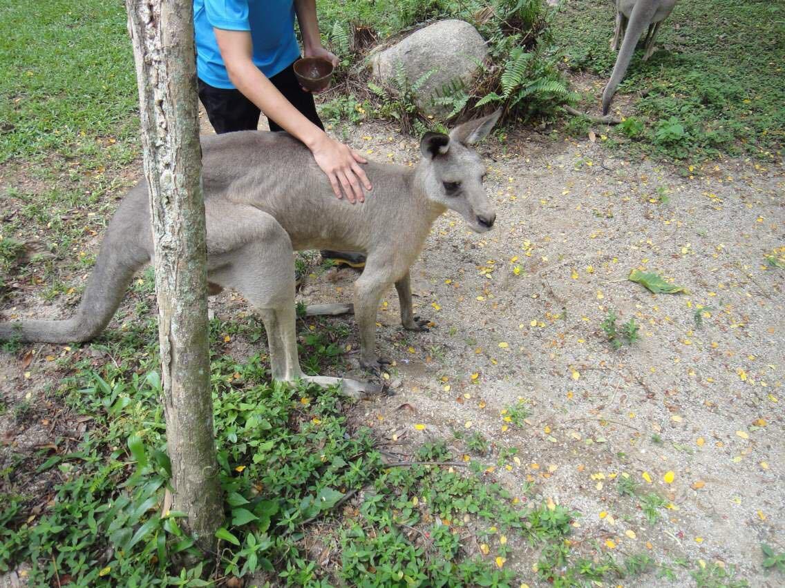 完美的动物园,能让宝宝安全自然的接触到不同的动物