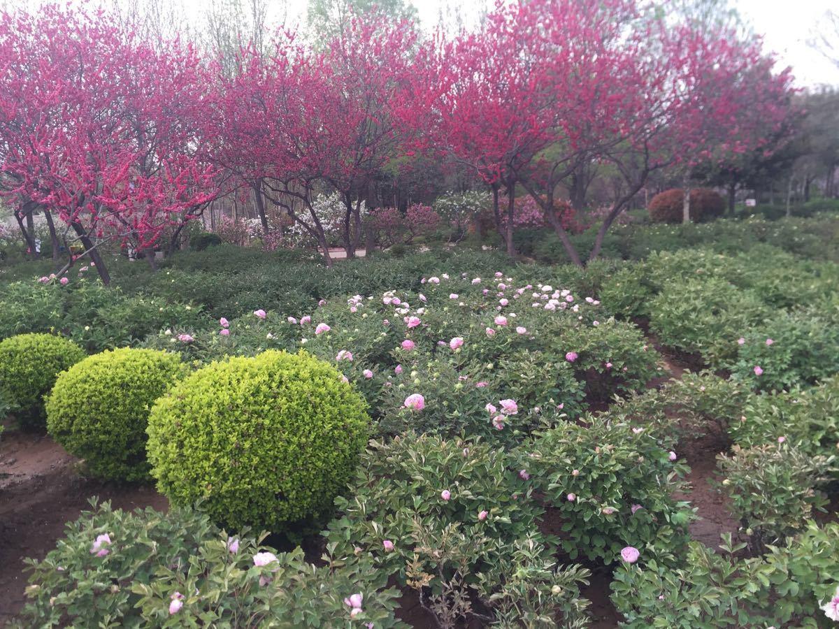【携程攻略】河南洛阳隋唐城遗址植物园好玩吗,河南城