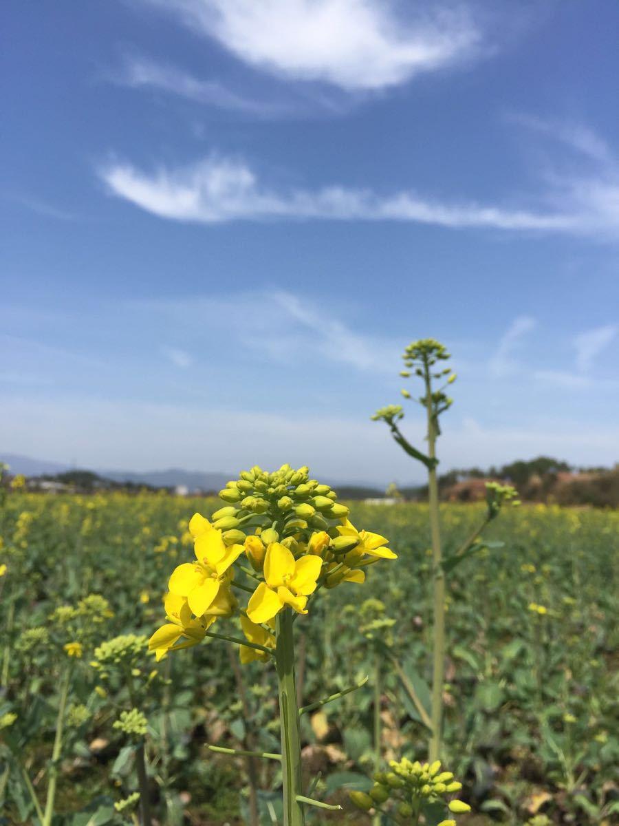 漂亮,风景秀丽,特别是春天