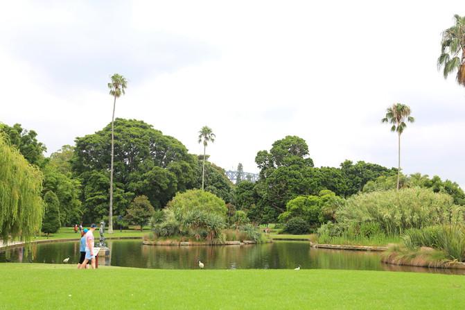 悉尼、堪培拉21日自由行⒁悉尼6-手册植物园-软件新编机械设计皇家版2008破解版图片