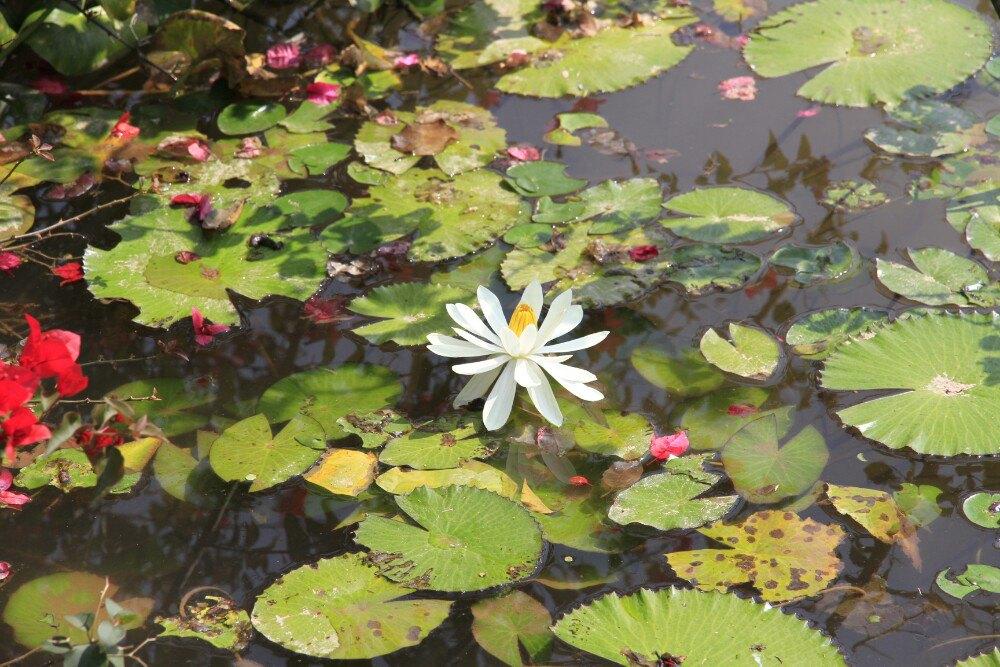 【携程攻略】海南保亭热带植物园好玩吗