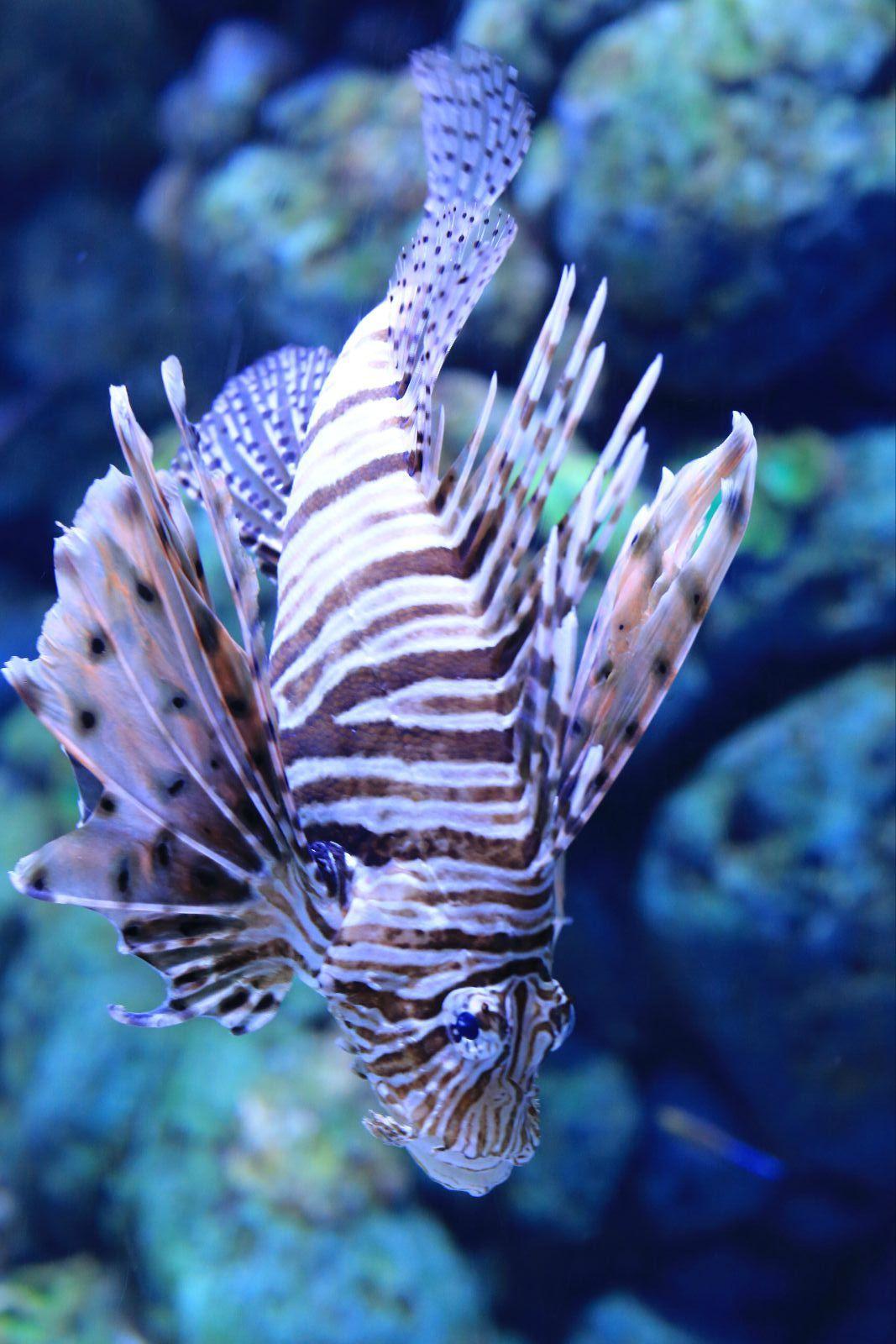 壁纸 动物 海底 海底世界 海洋馆 水族馆 鱼 鱼类 1067_1600 竖版 竖